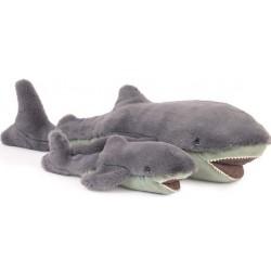 Petit requin Tout autour du...